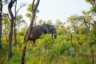 BUNAB Kruger conservation 2017